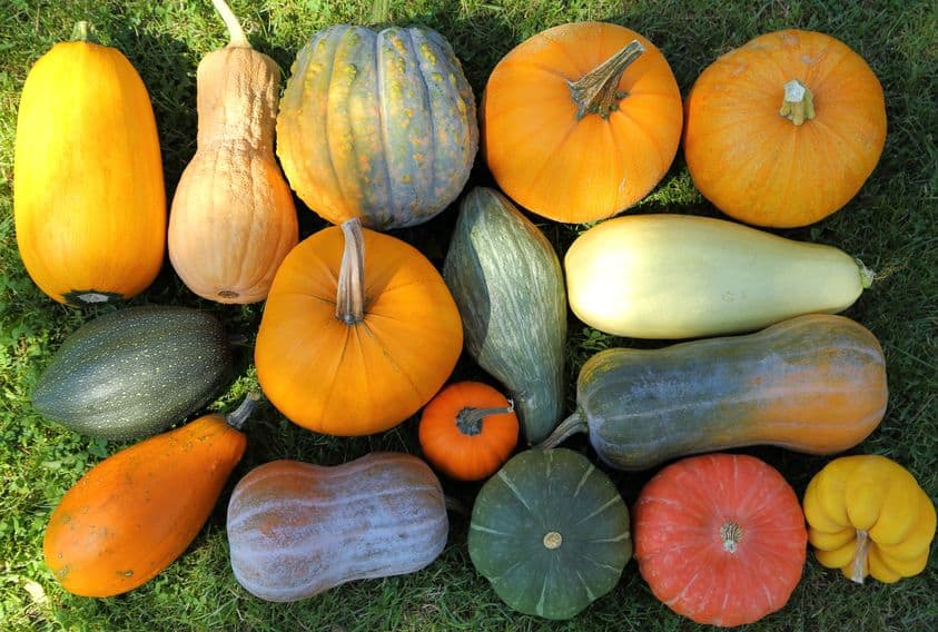 Different kinds of squash
