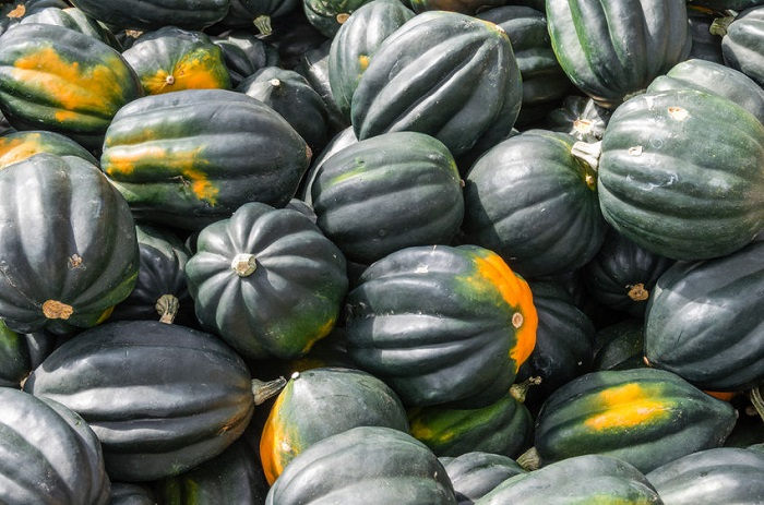 Squash types with pictures